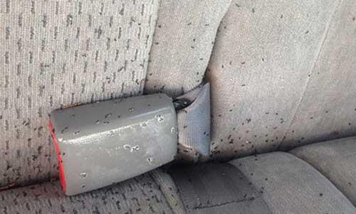 Cara Menghilangkan Semut di Mobil Paling Mudah